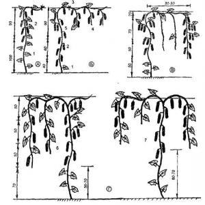 схема теплицы для огурцов.